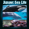 Jigsaw: Sea Life