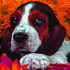 Aged house dog slide puzz…