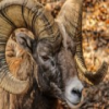 Animal Faces Hidden Image…