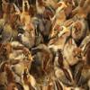 Baby Chickens Jigsaw