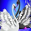 Black and white swans sli…