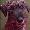 Brown docile dog slide pu…