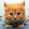 Cute Kitten Pairs