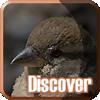 Discover: Bold Birds
