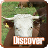 Discover: Farm Animals