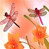 Dragonflies in the garden…