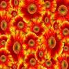 Gerba Flower Slider