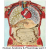 Human Anatomy & Physiolog…