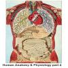 Human Anatomy and Physiol…