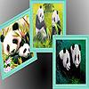 Hungry fattest pandas puz…