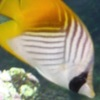 Jigsaw Fish