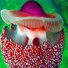 Ocean colorful jellyfish …