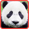 Parts of Picture:Panda