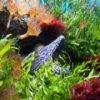 Underwater Hidden Images