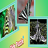 Zebra animals puzzle